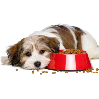 Feeding Your Fussy Dog