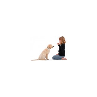 Five Dog Training Commands using FourFriends Natural Dog Treats