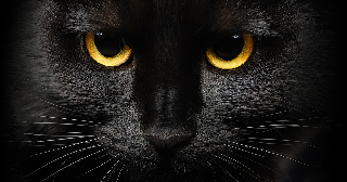 What did black cats do to deserve their dark reputation?