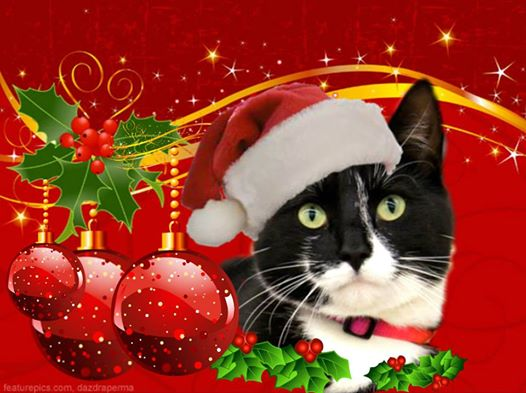 Keeping Your Dogs and Cats Safe at Christmas