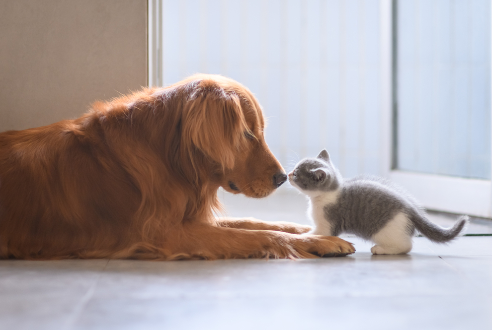 How to Introduce a New Kitten To Your Dog
