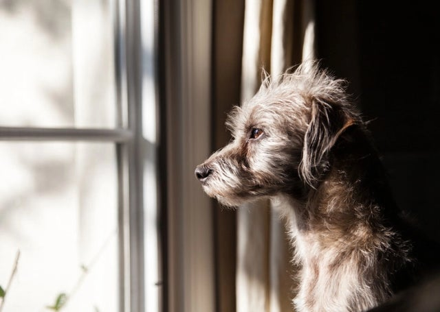 Easy Ways To Reduce Pet Anxiety at Back to School Time