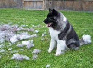 How To Help Reduce The Amount of Shedding in Your Dog