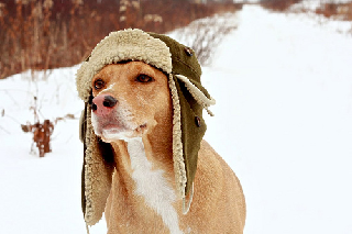 Dog Winter Survival Guide