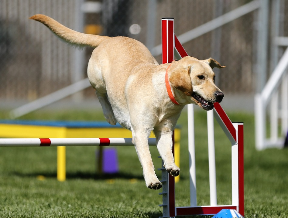 Fun Ways To Exercise Your Dog