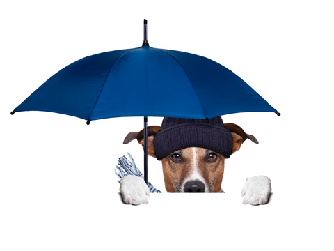 Have You Ever Noticed How Dogs Act in Certain Weather?