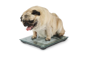 What is the best way for your dog to lose weight?