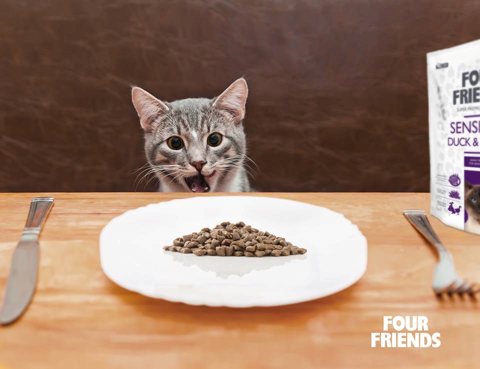 How Often Should You Feed Your Pet?